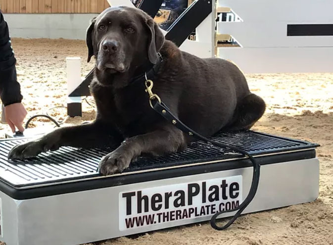 Dog TheraPlate