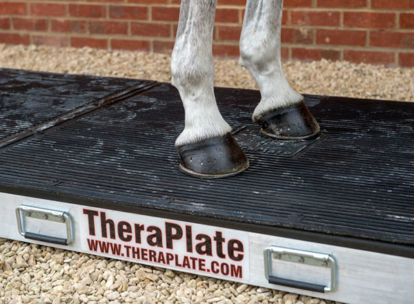 Horse on a TheraPlate